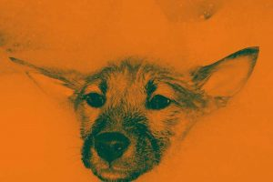 champus-perros-mywoody