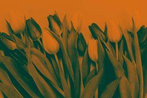 elegir-colores-diseno